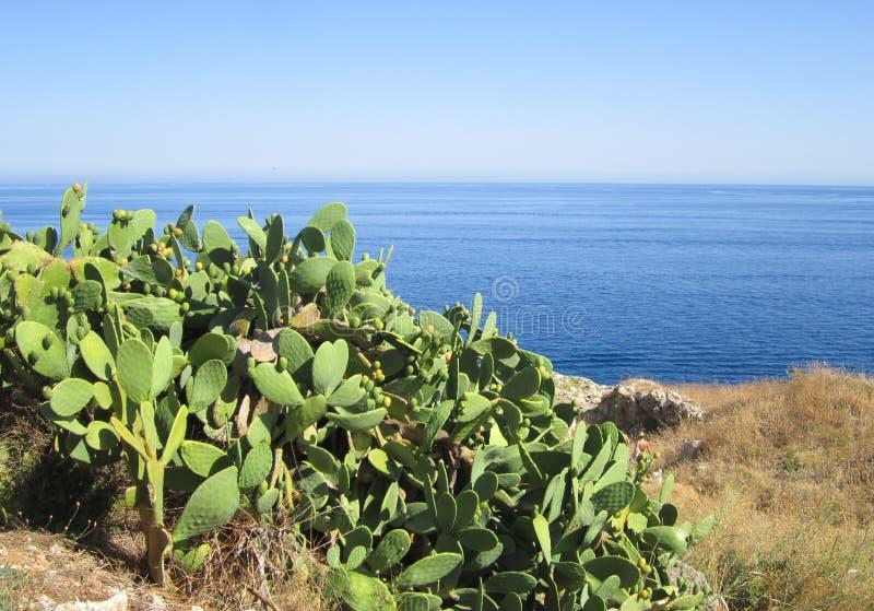Vijgcactus op Middellandse Zee royalty-vrije stock afbeeldingen