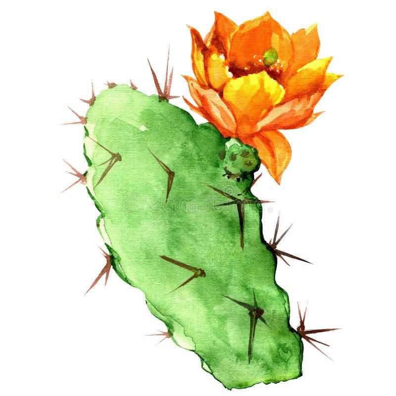 Vijgencactuscactus met gele bloem, waterverf stock illustratie