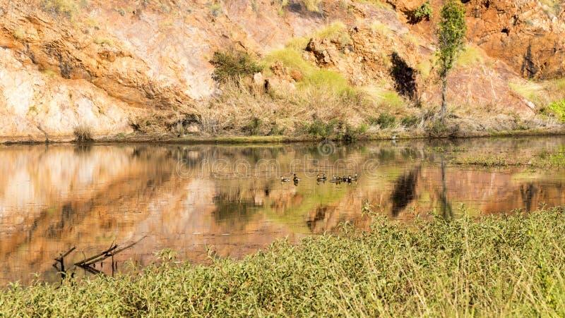 Vijver bij rand van Meer Argyle Western Australi stock afbeeldingen