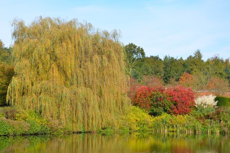 vijver in de herfst stock afbeeldingen