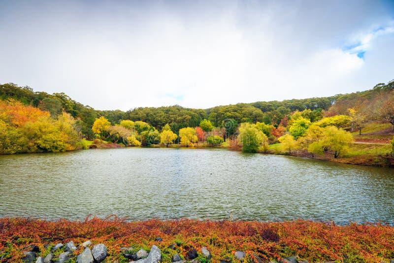 Vijver in de herfstpark stock afbeelding