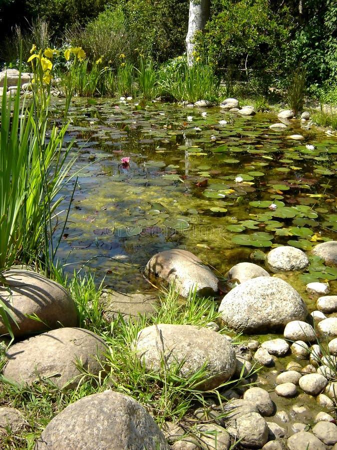 Vijver die met water wordt gevuld lillies royalty-vrije stock foto