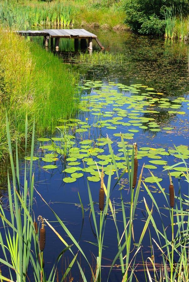 Vijver en waterplanten stock afbeeldingen