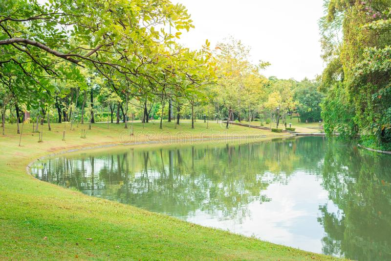 Vijver in het mooie park met warm licht stock foto