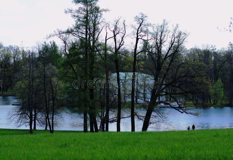 Vijver in het park stock afbeelding