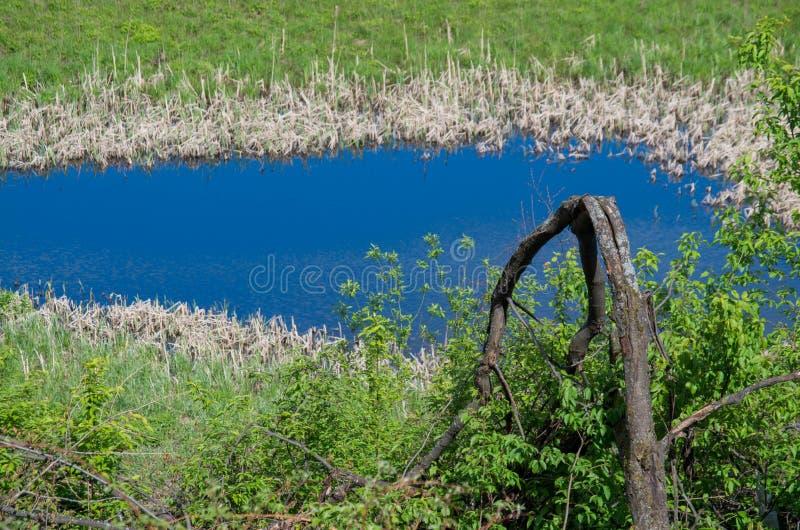 Vijver, moeras en struikgewas rond het stock afbeelding