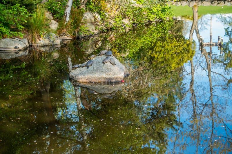 Vijverbezinning en Schildpadden 2 stock fotografie