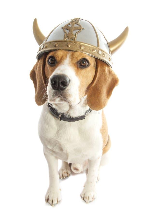 Viking hund arkivfoto