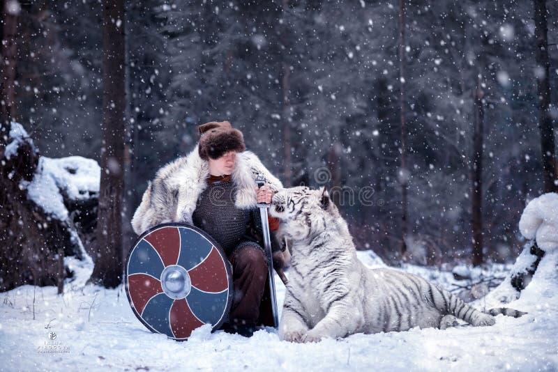 Viking-tribunes op één knie naast een witte tijger stock afbeeldingen