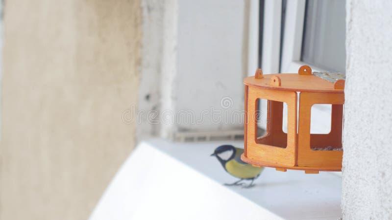 Viktigt picka frö för mesfågelParus i fågelförlagemataren royaltyfria foton