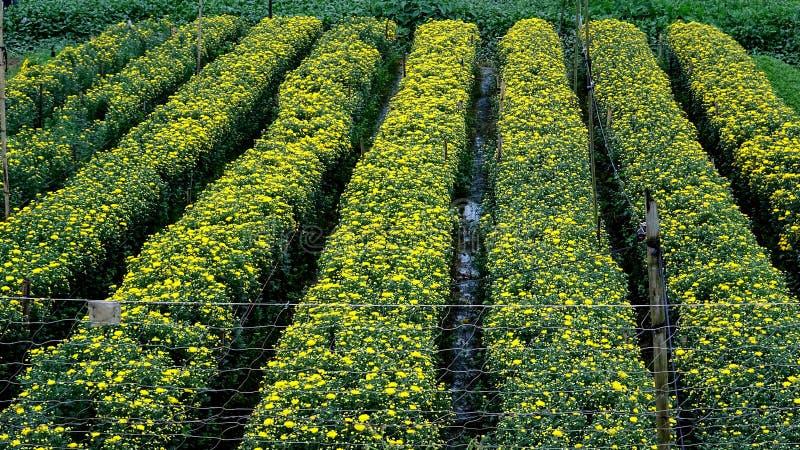 A vila apressando-se da flor nos últimos dias do ano imagens de stock royalty free