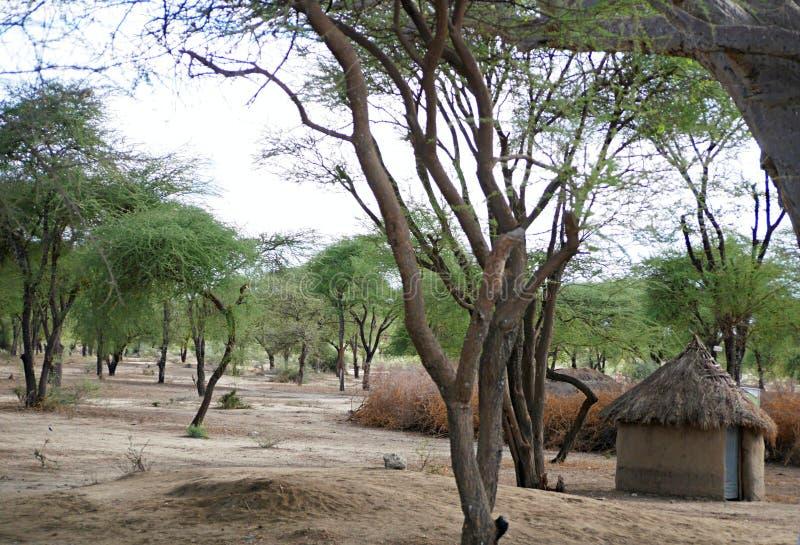 A vila das massas no safari de Tarangiri - Ngorongoro em Afric foto de stock