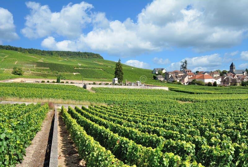 Vila de Oger, região de Champagne, Epernay, França imagem de stock royalty free