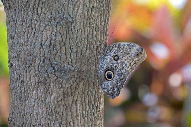 vila för fjäril arkivfoton