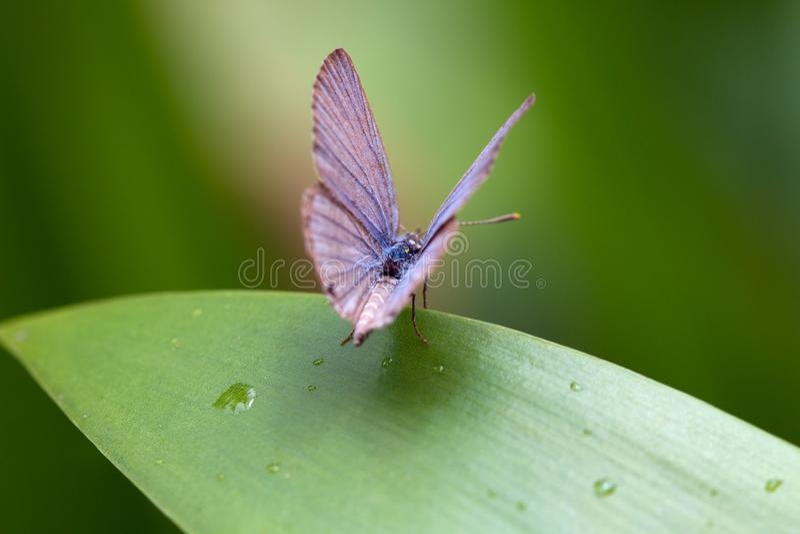 vila för fjärilsleaf arkivbilder