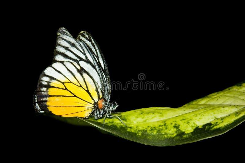 vila för fjärilsleave royaltyfria bilder