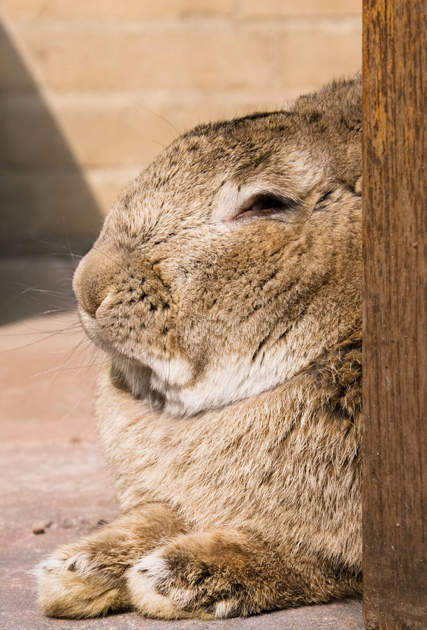 vila för kanin arkivbilder