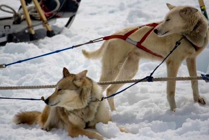 Vila för slädehundkapplöpning arkivbild