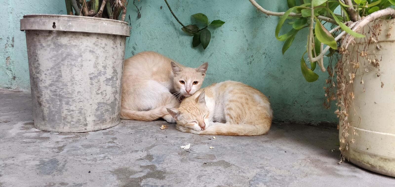Vila katter arkivfoton