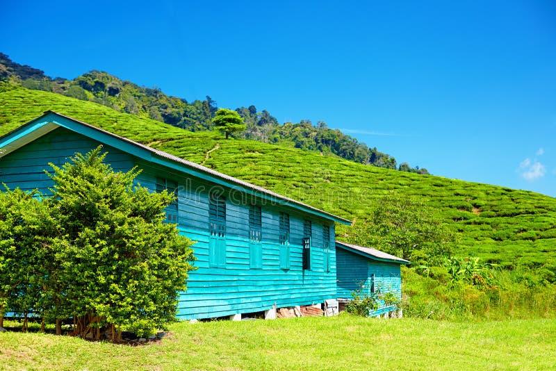 Vila local de coletores do chá em Cameron Highlands foto de stock royalty free
