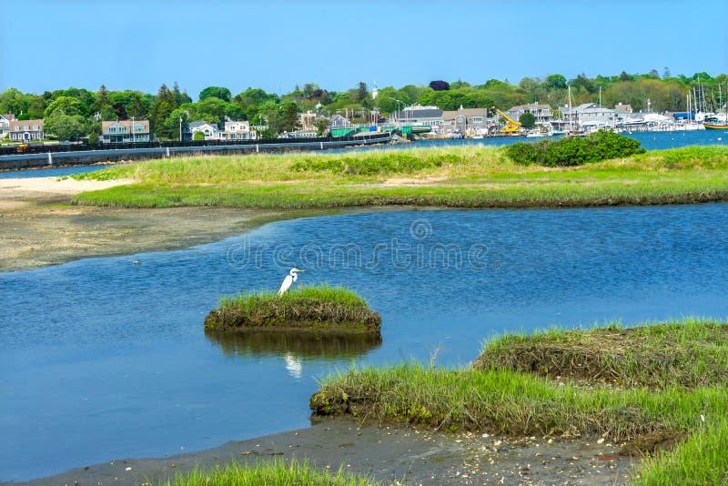 Vila nova Dartmouth M do porto da ponte de Padnaram do grande Egret branco fotos de stock