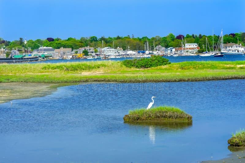 Vila nova Dartmouth M do porto da ponte de Padnaram do grande Egret branco foto de stock royalty free