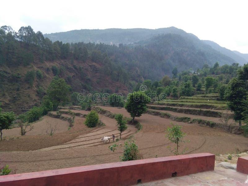 Vila que cultiva o amor da natureza das colheitas imagem de stock