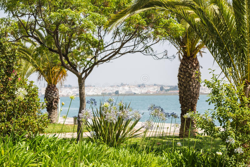 Vila Real de Santo Antonio, Portugal. Purple flowers framed by palm trees looking out from Vila Real de Santo Antonio, Portugal across the Guadiana River to royalty free stock images