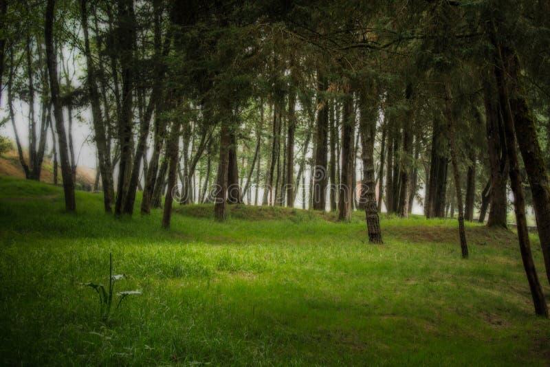 Vila skogen royaltyfria foton