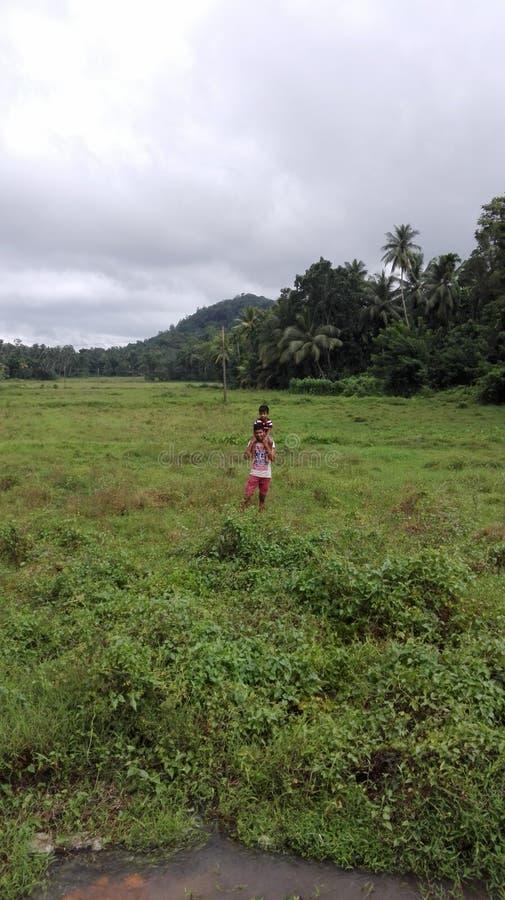 Vila, Sri Lanka, Paddy Fields imagens de stock
