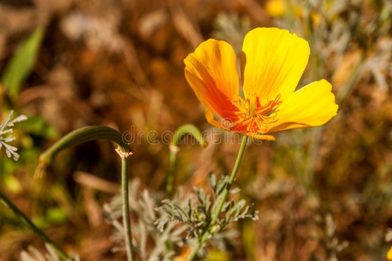 Vilaflor Wildflowers στοκ φωτογραφία με δικαίωμα ελεύθερης χρήσης