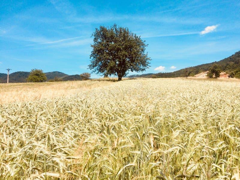 Vilage de la naturaleza de la granja del campo del árbol foto de archivo