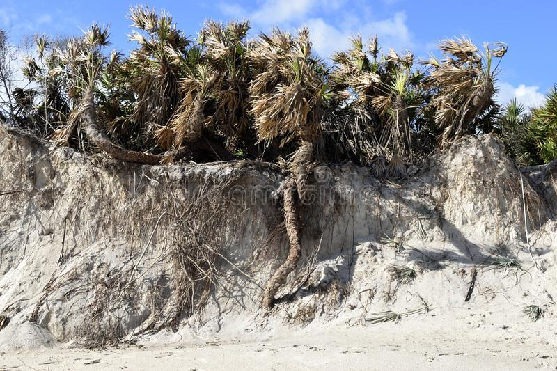Vilano beach erosion by hurricane. Beach erosion and damage to plants and trees caused by the wind and sea waves during the hurricane of 7th October 2016, blue stock images