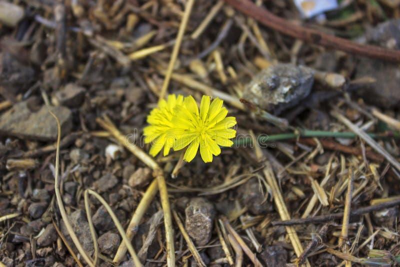 Vild blomma på marken med kvistar och stenar royaltyfri foto