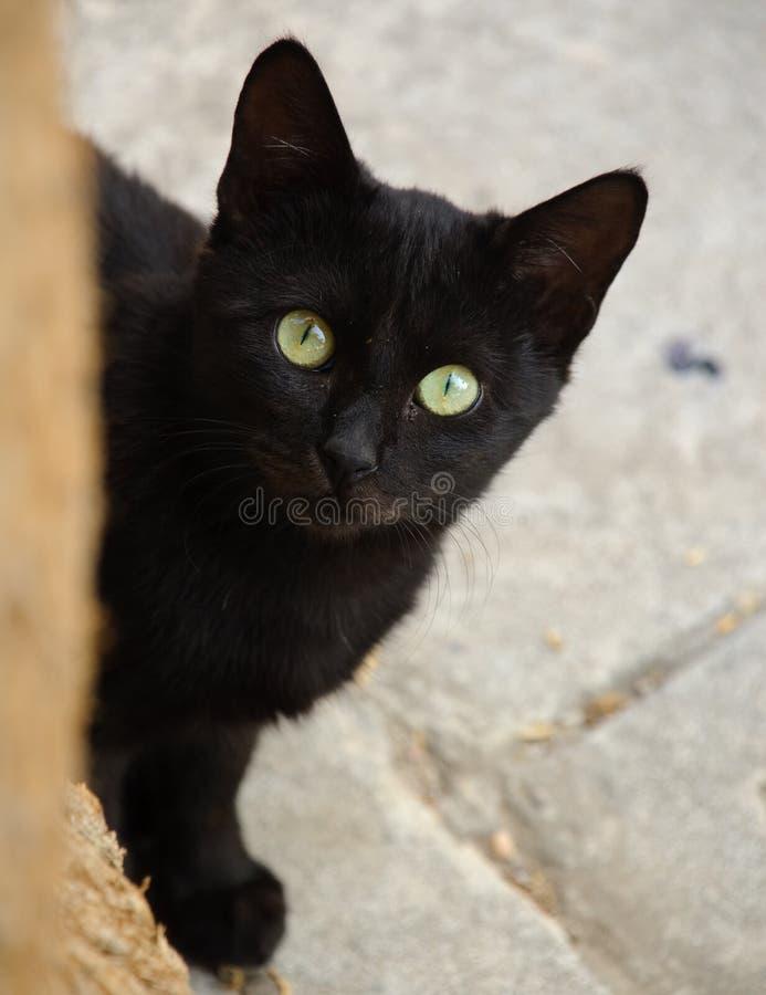 vild katt royaltyfri foto
