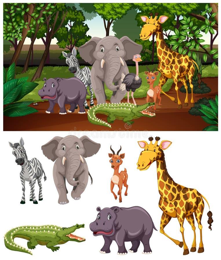Vilda djur i skogen royaltyfria bilder