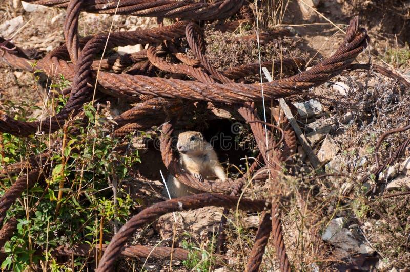 Vilda djur kan slocknad tack vare förstörelse av naturliga livsmiljöer royaltyfria foton