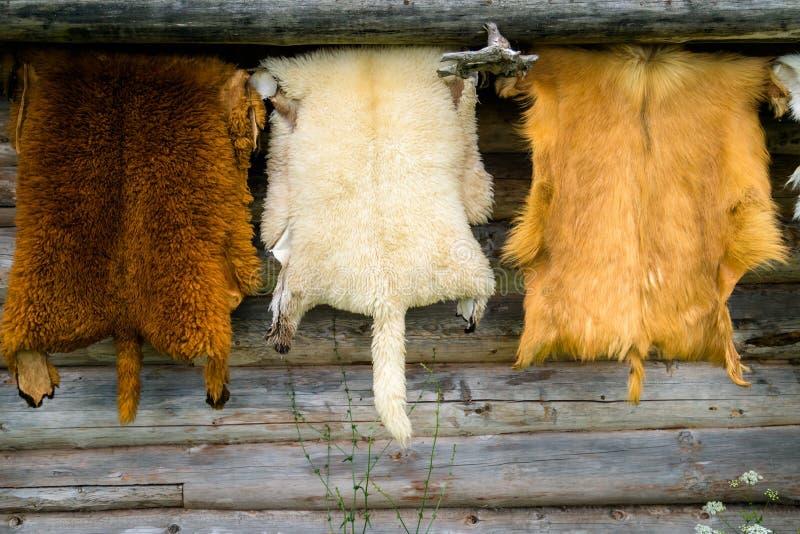 Vilda djur pälsfodrar att hänga på den trähem- väggen utanför royaltyfri fotografi