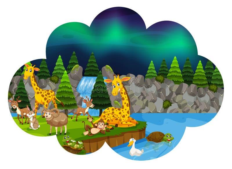 Vilda djur på natten royaltyfri illustrationer