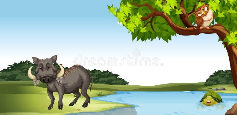 Vilda djur vid dammet royaltyfri illustrationer