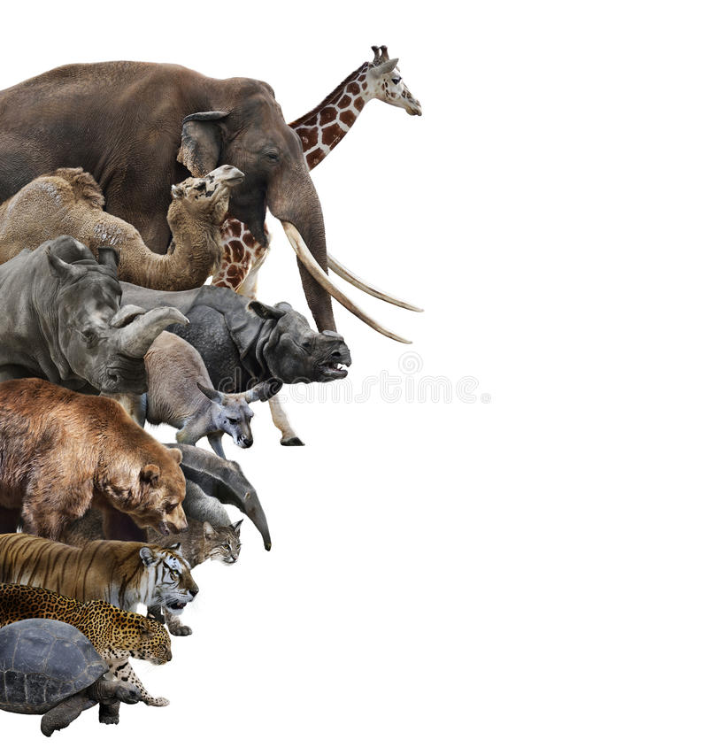 Vilda djurcollage royaltyfria bilder
