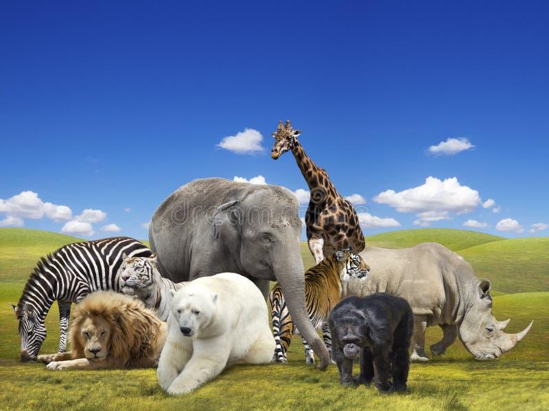 Vilda djurgrupp arkivbilder