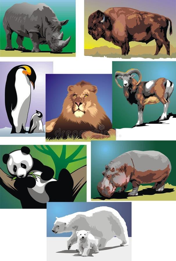 Vilda djurkort stock illustrationer
