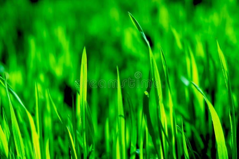 Vildblommafält royaltyfri foto