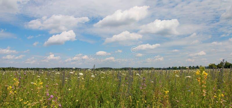 Vildblommafält som planteras för jordförbättring royaltyfria bilder