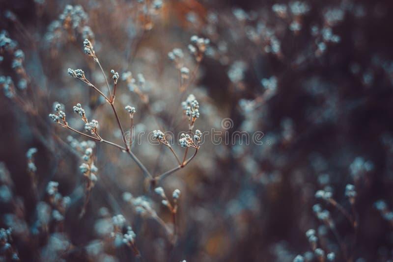 vildblommar fotografering för bildbyråer