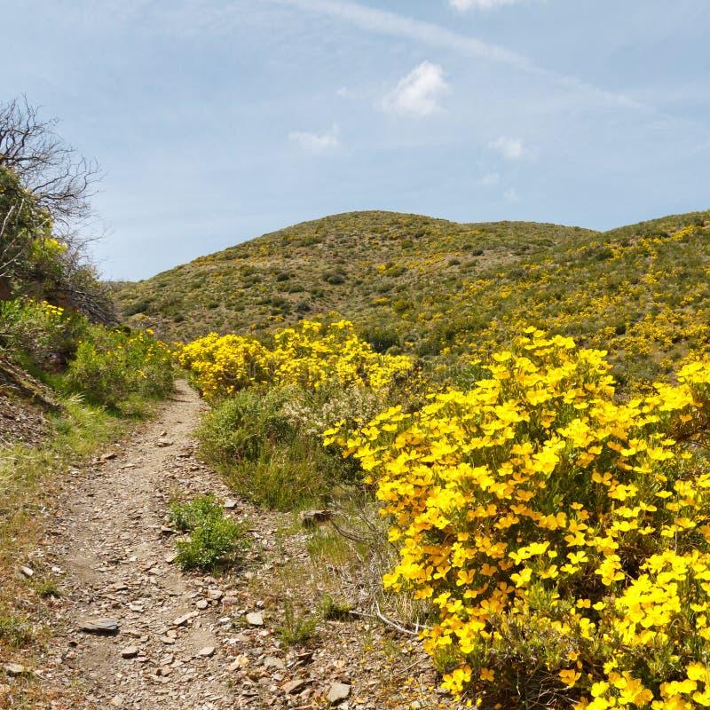 vildblommar för tillstånd för park för anzaborregoöken royaltyfri bild