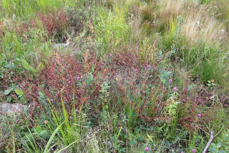 vildblommar V?r eller sommarvildblommacloseup Gräs för Ð-¡ vän arkivfoto