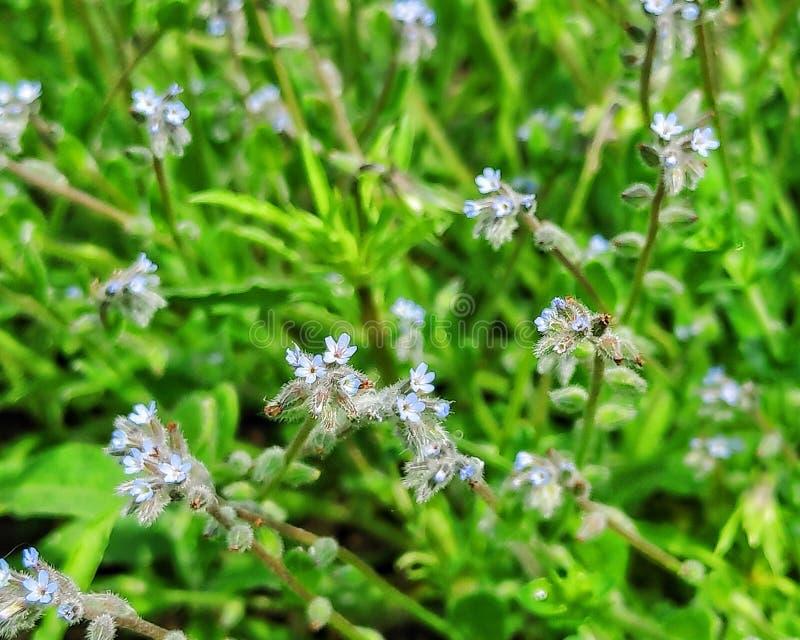 Vildblommor, härliga blommor och solig dag royaltyfri foto