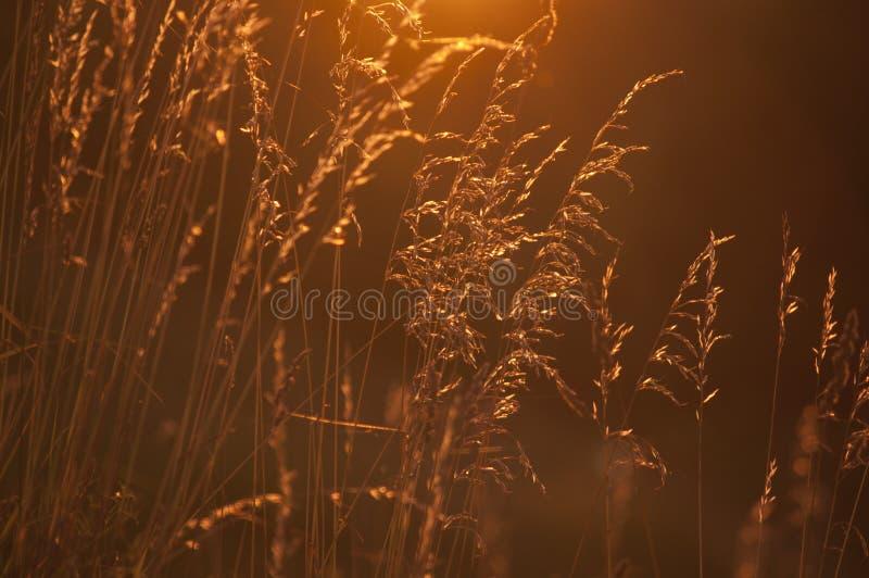 Vildblommor i äng under solnedgång fotografering för bildbyråer